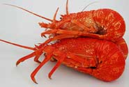 cooked whole crayfish