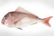 snapper whole